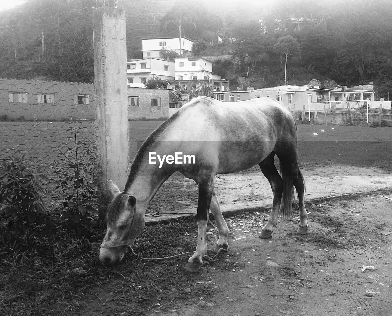 horse, domestic animals, animal themes, livestock, mammal, one animal, built structure, outdoors, building exterior, no people, day, architecture, nature, tree
