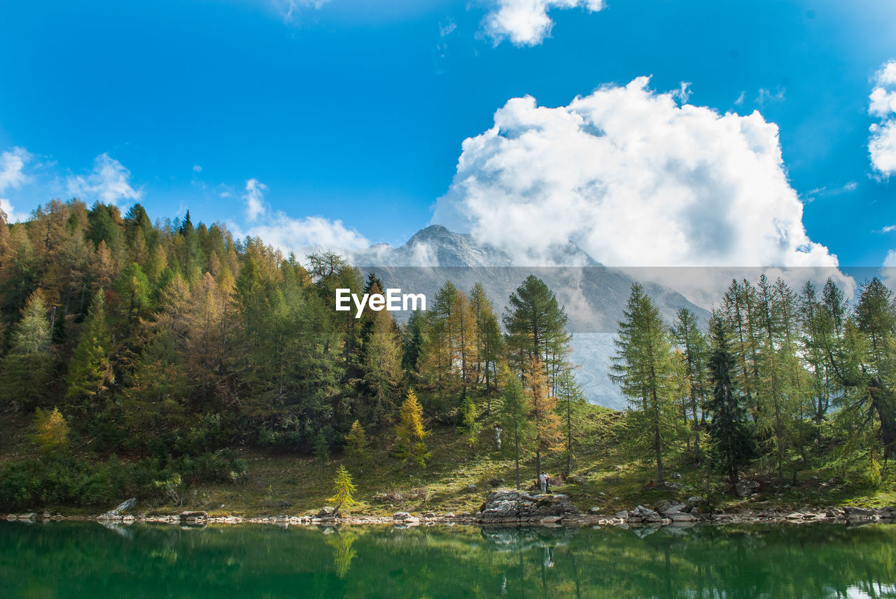 PANORAMIC VIEW OF TREES AND LAKE AGAINST SKY