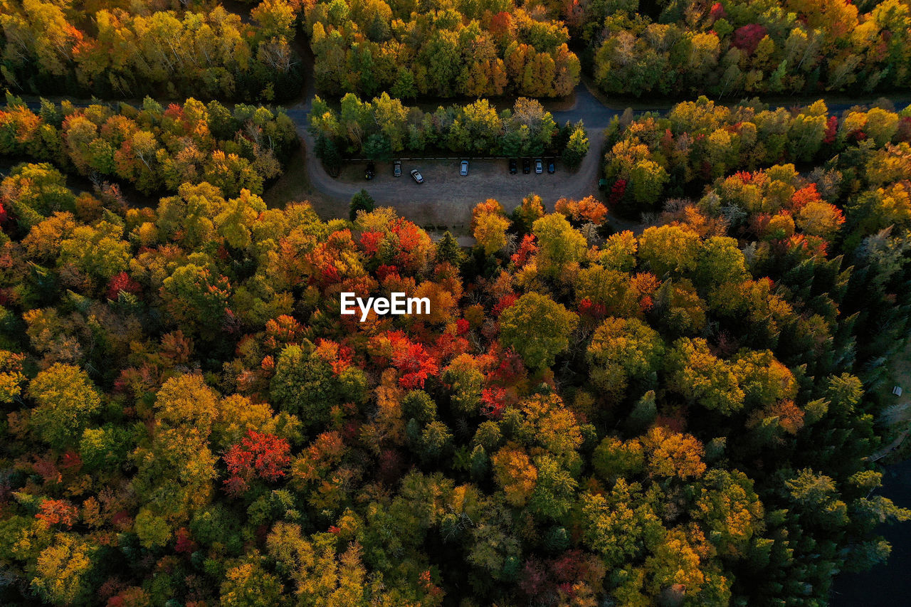 High angle view of flowering plants by trees in forest during autumn