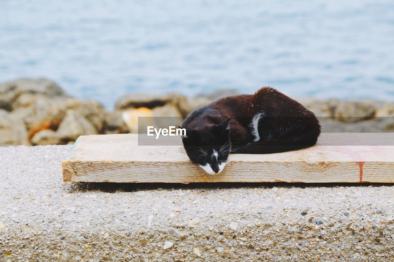 one animal, animal themes, animal, mammal, domestic animals, domestic, pets, vertebrate, no people, day, black color, water, focus on foreground, nature, animal wildlife, relaxation, feline, cat, domestic cat
