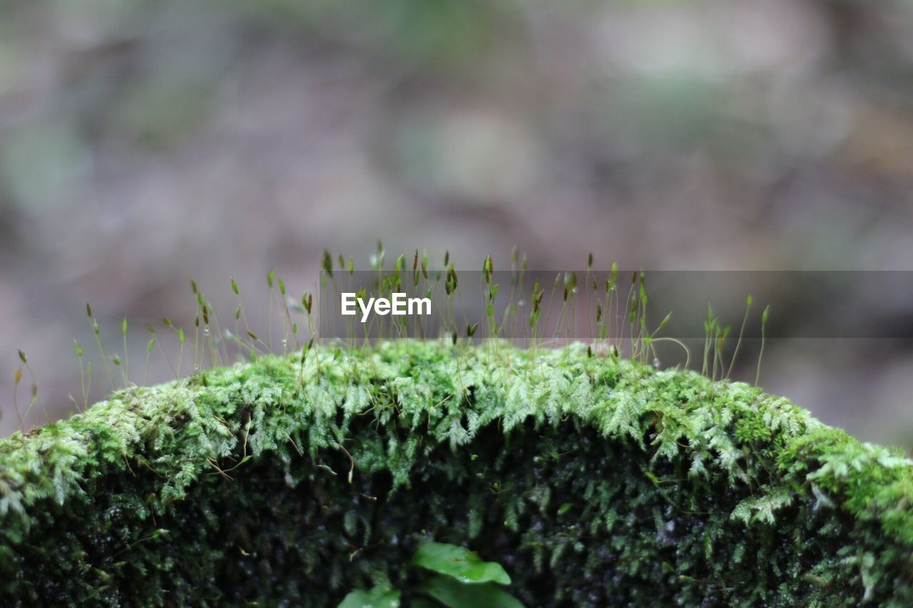 growth, plant, nature, green color, beauty in nature, close-up, outdoors, no people, focus on foreground, freshness, leaf, day, fragility, fern