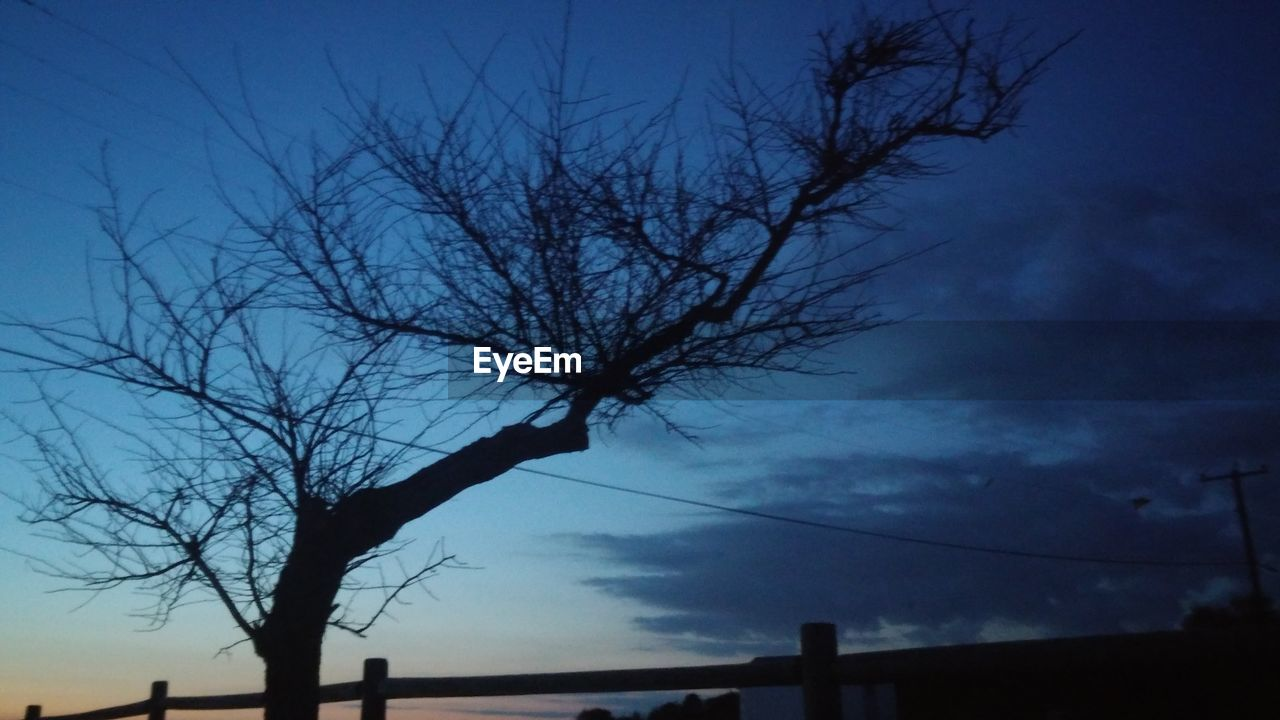 bare tree, silhouette, sky, nature, no people, branch, tree, low angle view, outdoors, beauty in nature, bleak, day