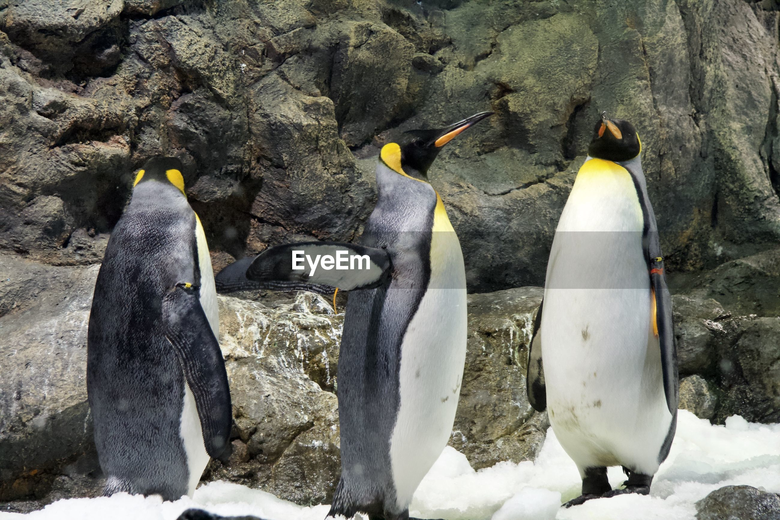High angle view of penguins on rock in zoo