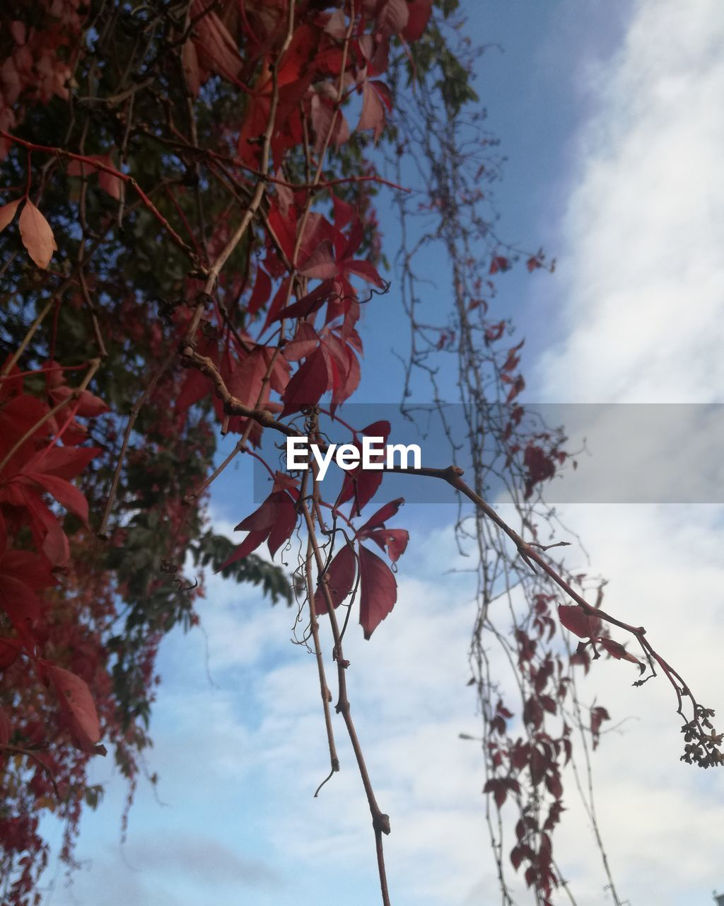 tree, low angle view, branch, nature, leaf, beauty in nature, day, growth, autumn, sky, outdoors, no people, fragility, flower, close-up, freshness