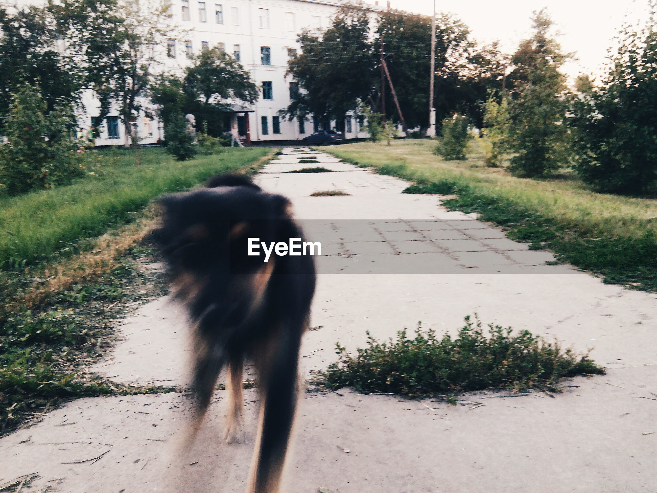 Blurred dog on narrow pathway