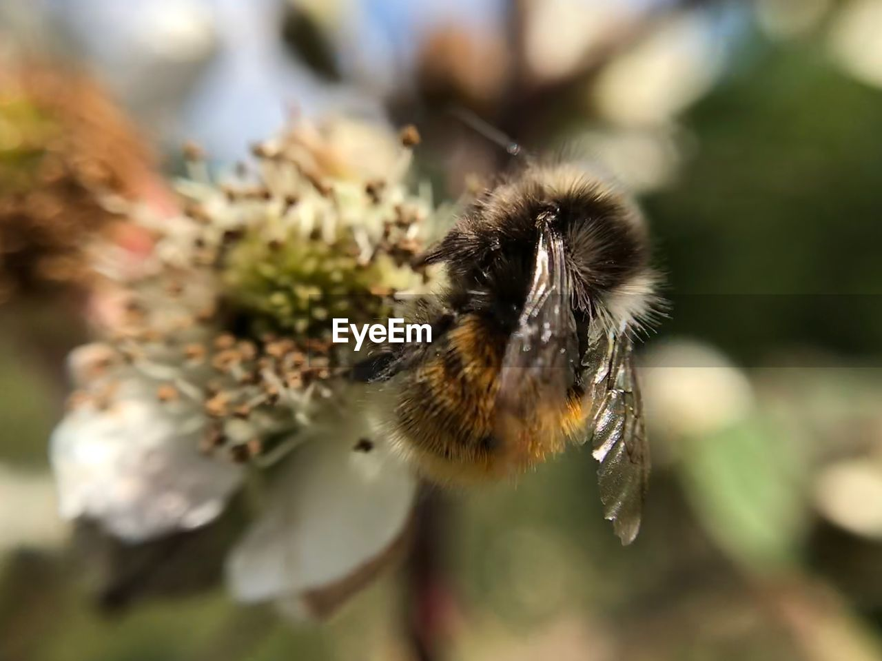 invertebrate, insect, animal themes, one animal, animal, bee, animal wildlife, animals in the wild, flower, plant, close-up, beauty in nature, flowering plant, selective focus, day, no people, nature, fragility, focus on foreground, growth, flower head, pollination, bumblebee, outdoors