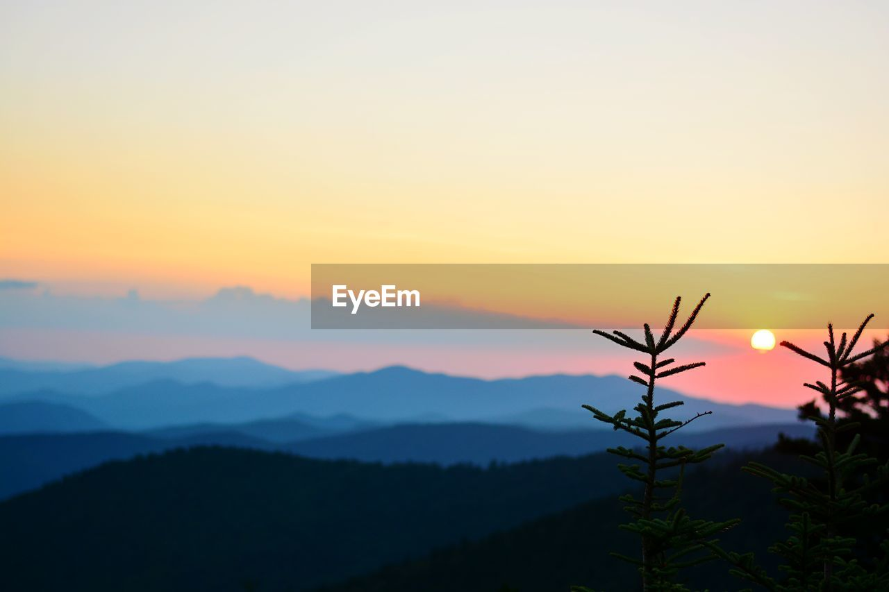 sunset, beauty in nature, sky, scenics - nature, tranquility, tranquil scene, plant, silhouette, orange color, growth, nature, non-urban scene, idyllic, no people, copy space, mountain, tree, sun, outdoors, environment