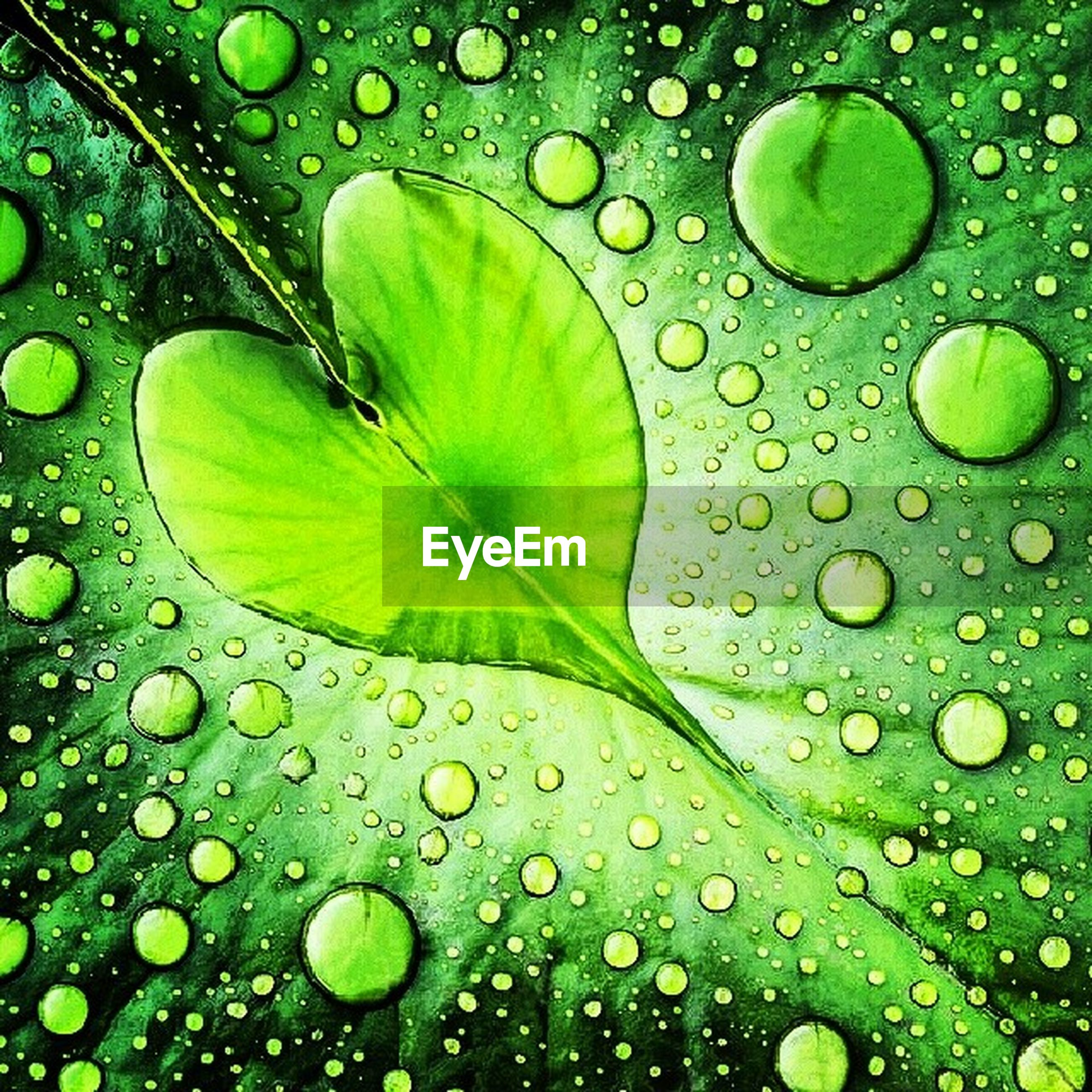 drop, wet, water, green color, full frame, backgrounds, freshness, leaf, close-up, raindrop, dew, water drop, fragility, natural pattern, rain, droplet, purity, leaf vein, nature, growth