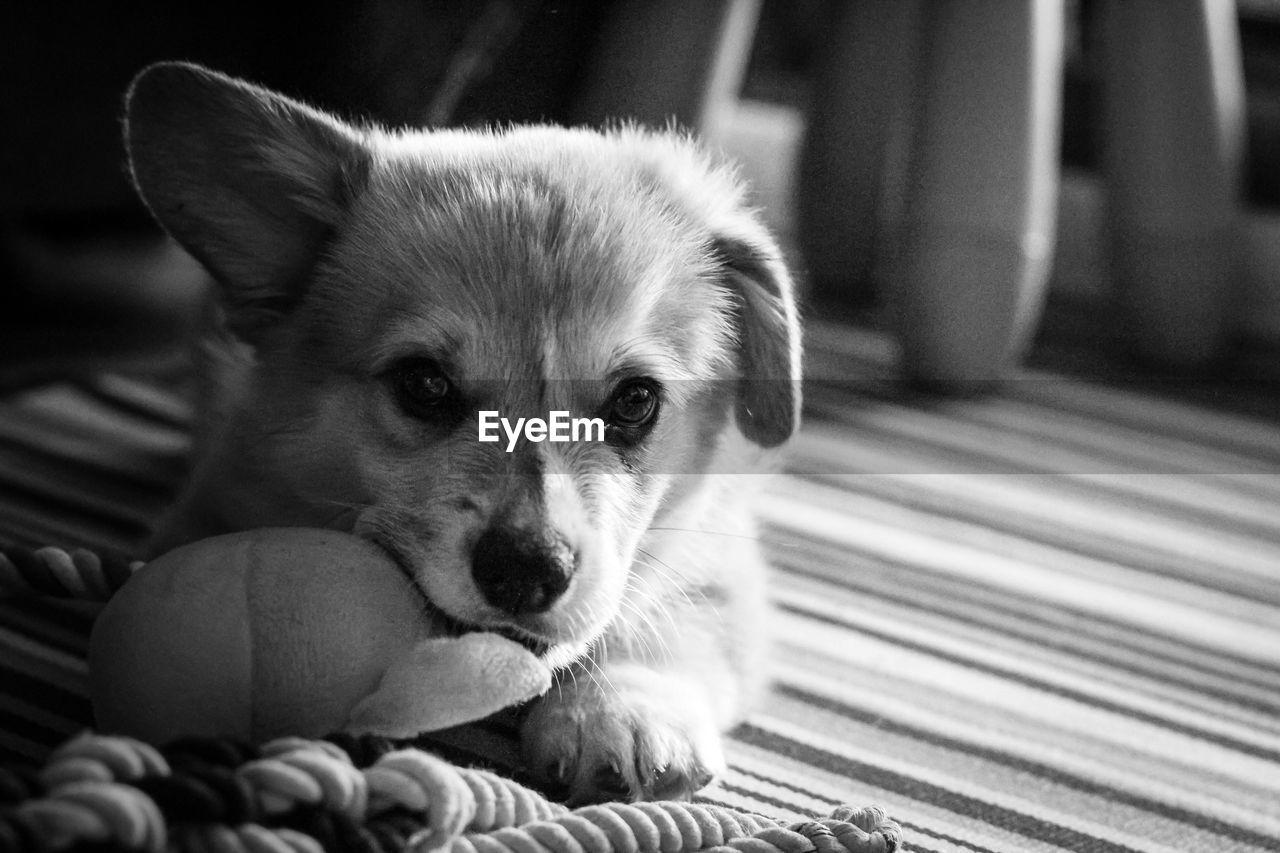 PORTRAIT OF DOG LYING DOWN ON FLOOR