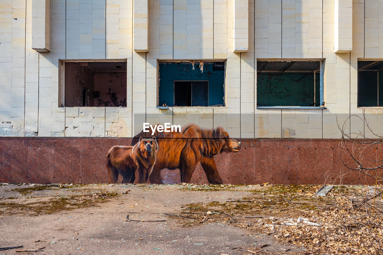 HORSES IN A BUILDING