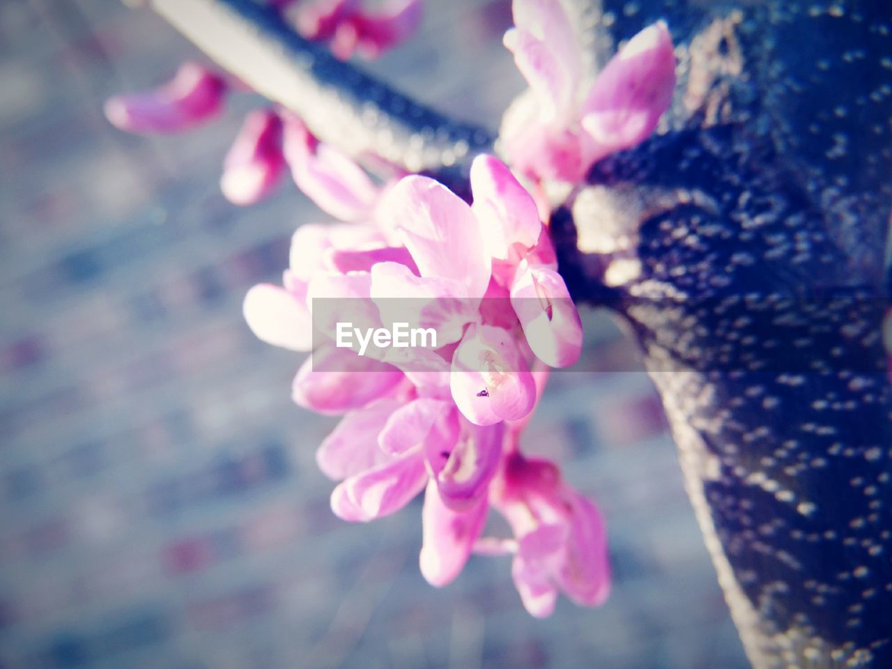flower, pink color, petal, nature, beauty in nature, fragility, close-up, growth, freshness, outdoors, no people, day, flower head, blooming