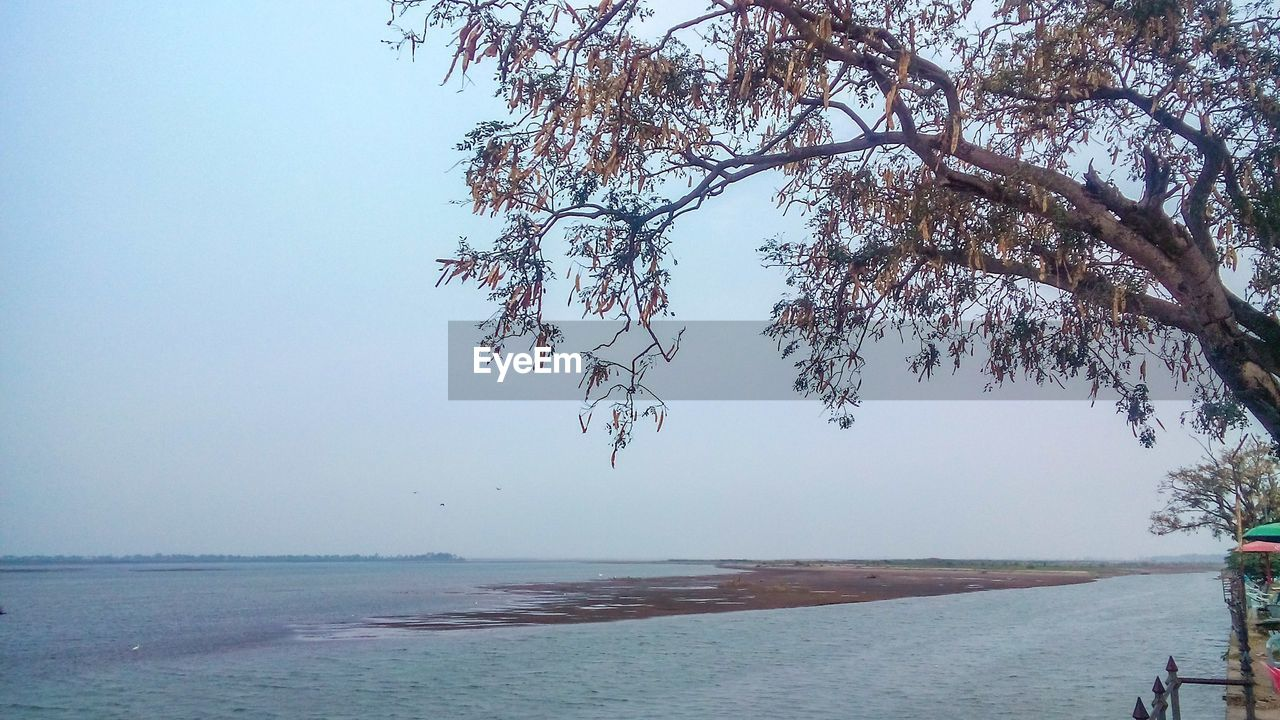 sea, water, nature, tree, beauty in nature, scenics, tranquility, tranquil scene, horizon over water, outdoors, beach, branch, clear sky, sky, day, no people