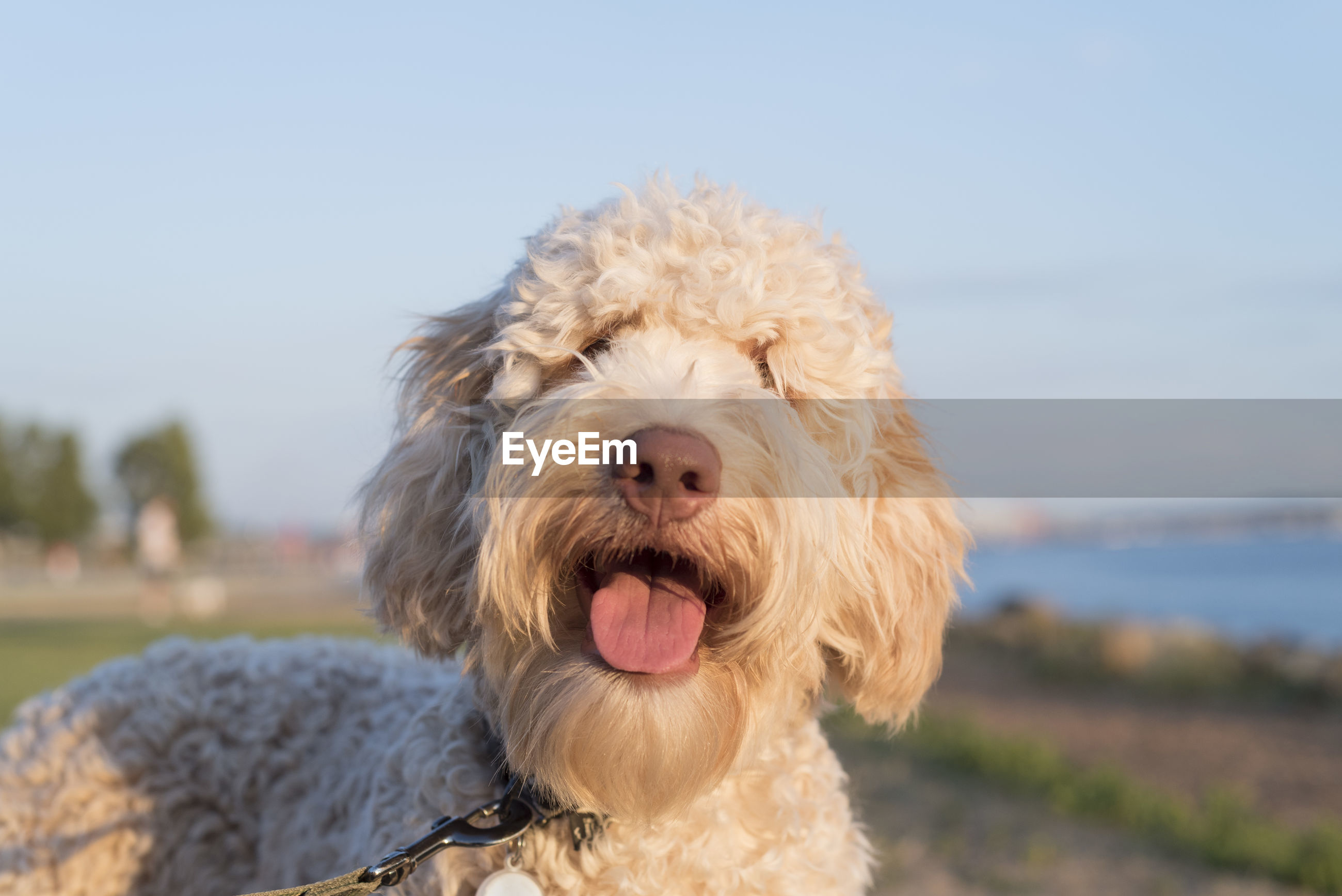 Close-Up Of Dog Against Clear Sky