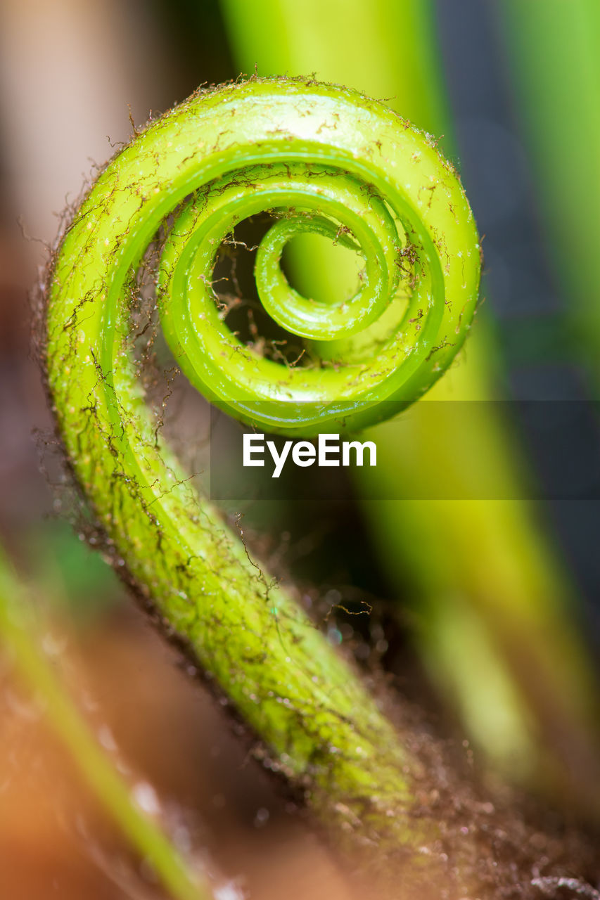 green color, close-up, selective focus, spiral, tendril, no people, plant, freshness, nature, growth, beauty in nature, curled up, focus on foreground, fern, fragility, vulnerability, day, extreme close-up, vegetable, water