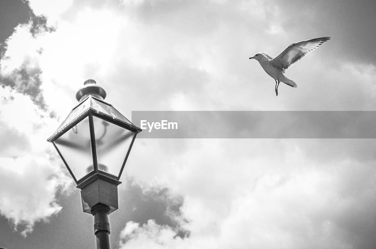 Low angle view of seagull flying by street light against cloudy sky