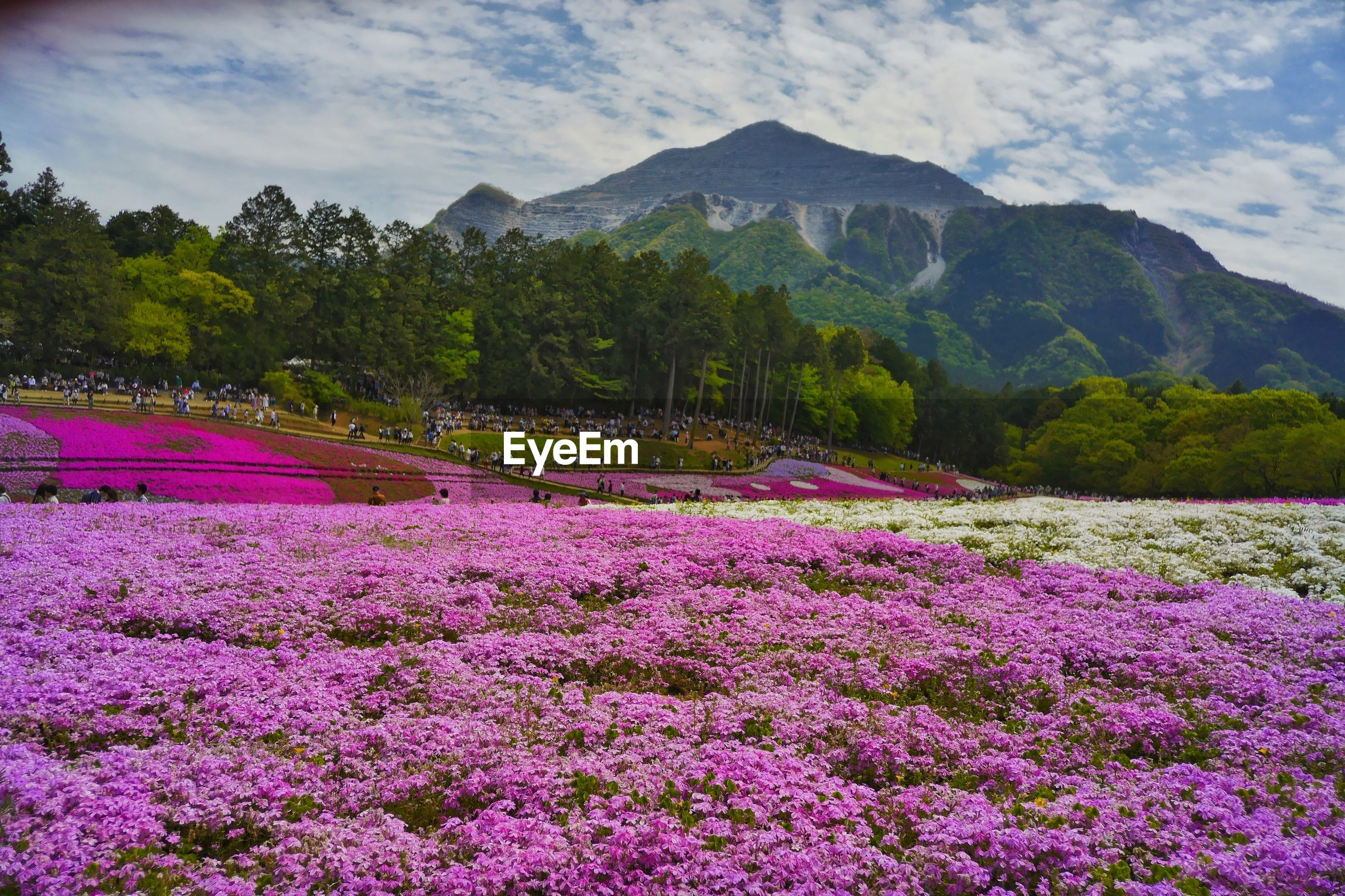 VIEW OF FLOWERS IN MOUNTAINS