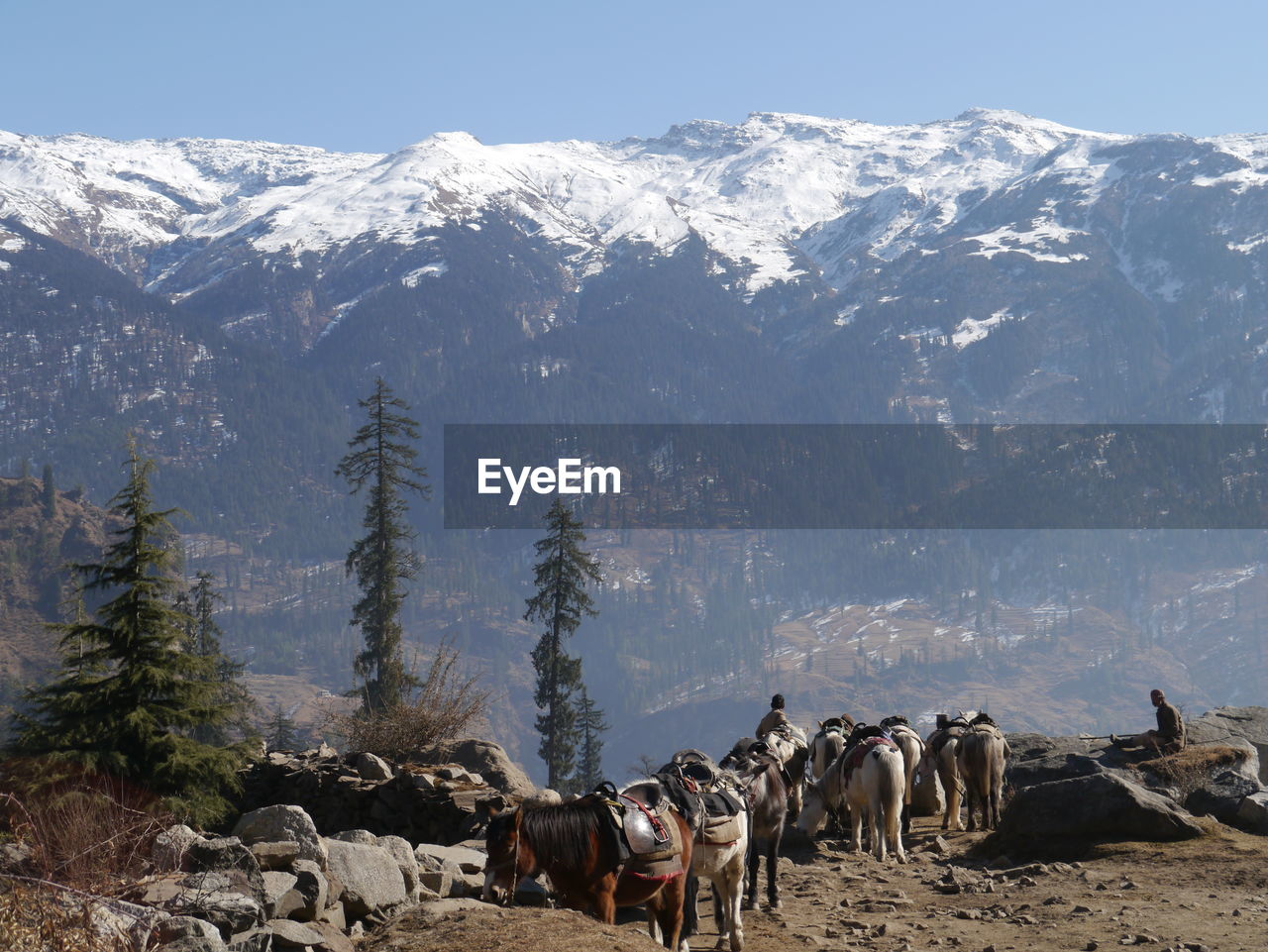 Men With Horses Against Snowcapped Himalayas Mountains