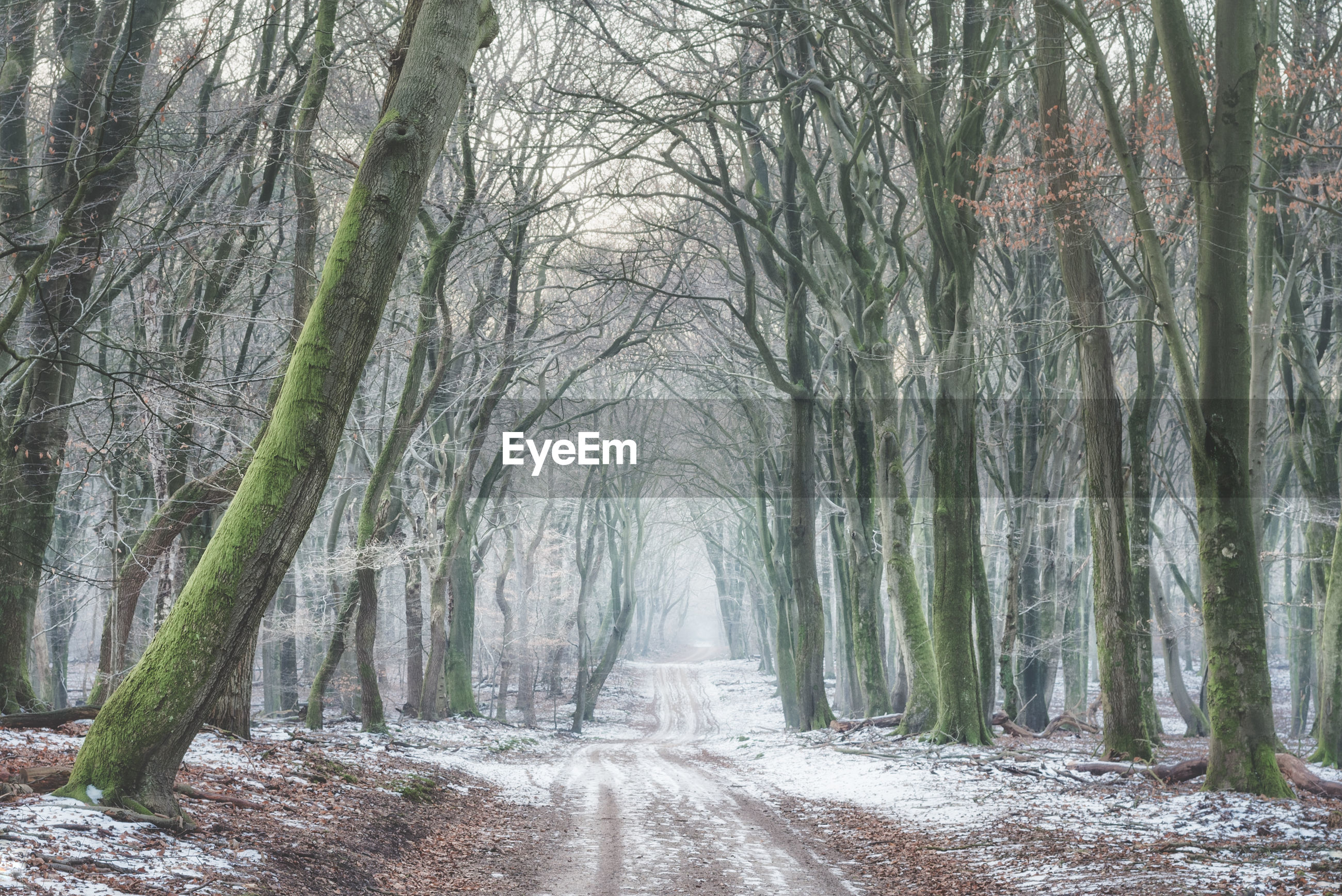 BARE TREES ON LANDSCAPE IN FOREST