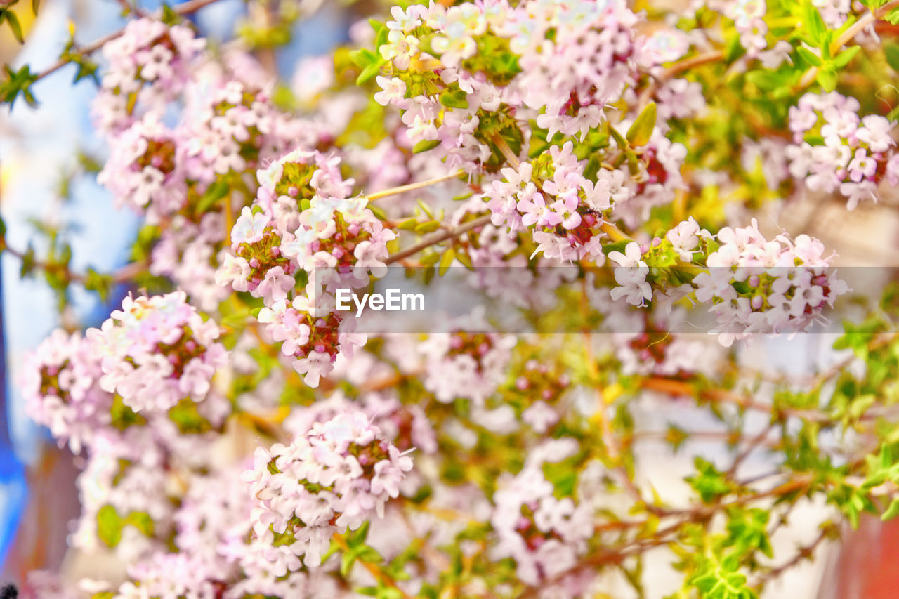 flower, nature, blossom, fragility, beauty in nature, close-up, no people, growth, selective focus, day, freshness, springtime, outdoors, tree, branch, flower head