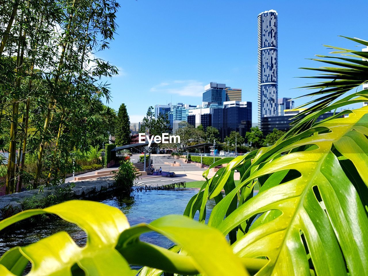 growth, architecture, building exterior, built structure, tree, plant, water, day, outdoors, skyscraper, city life, palm tree, nature, city, modern, clear sky, beauty in nature, no people, sky