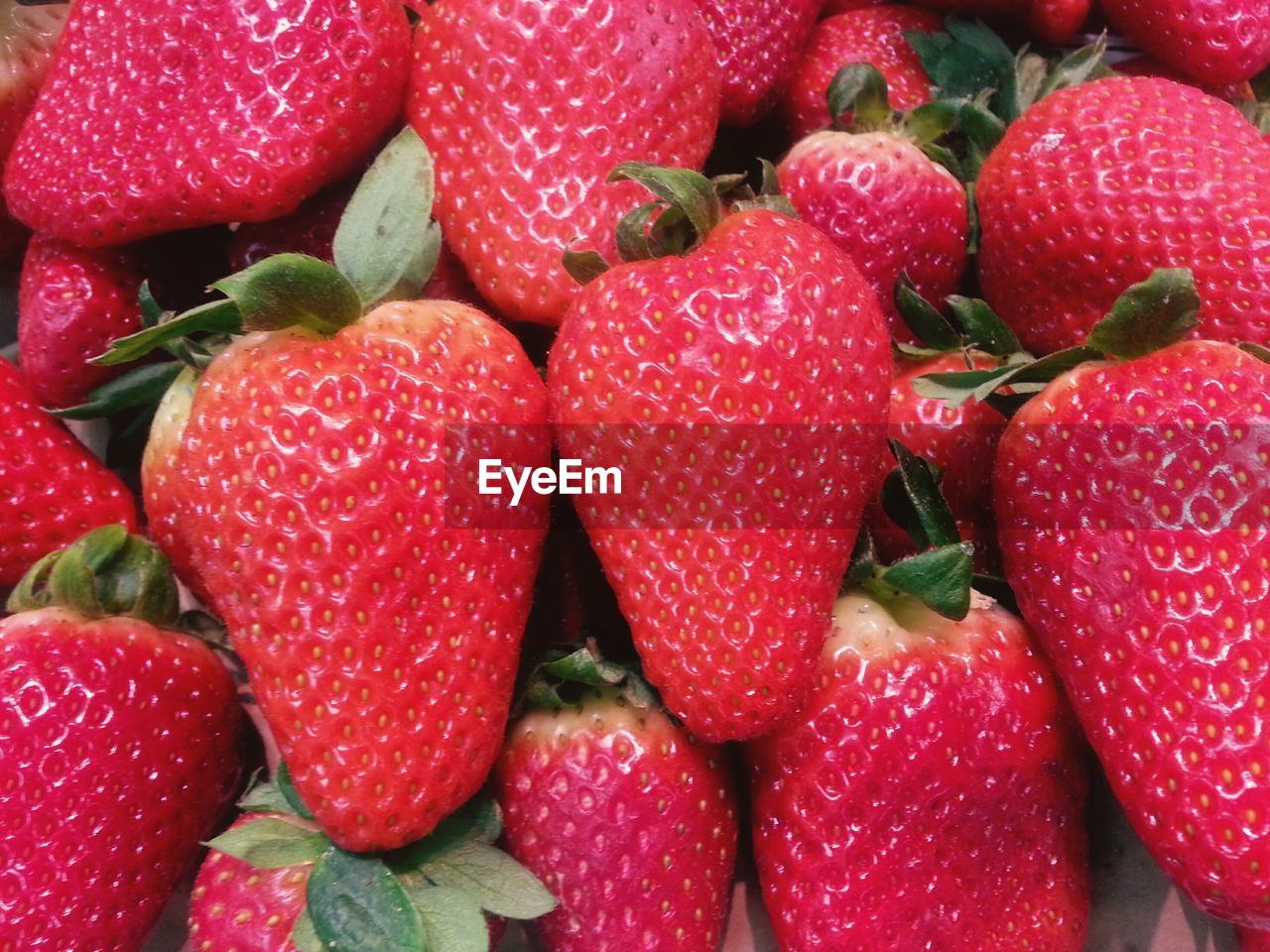 fruit, strawberry, red, food and drink, freshness, food, healthy eating, full frame, close-up, no people, large group of objects, backgrounds, indoors, growth, day, ready-to-eat