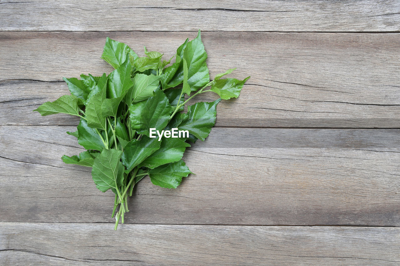 green color, food and drink, leaf, plant part, freshness, food, wood - material, table, no people, high angle view, healthy eating, wellbeing, close-up, directly above, still life, indoors, nature, vegetable, herb, plant, leaves