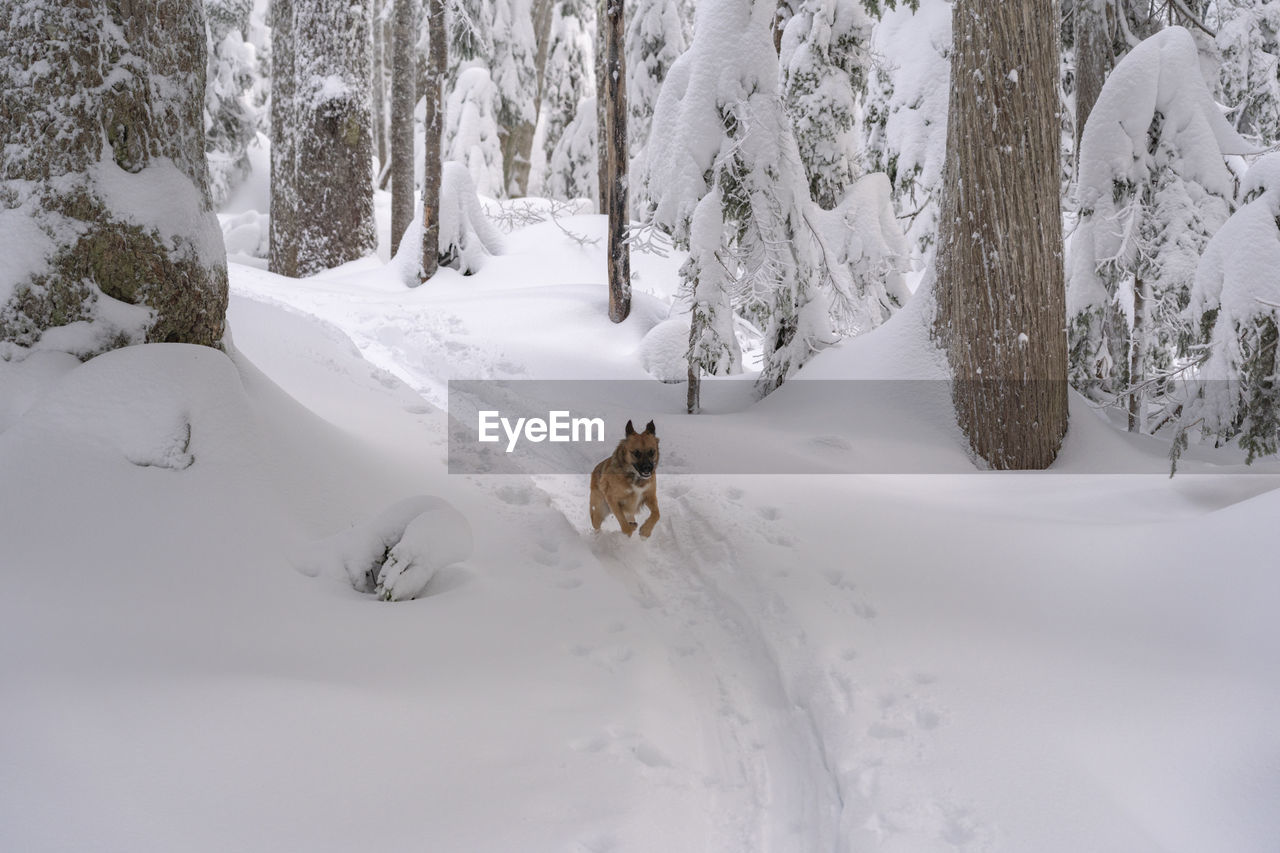 snow, cold temperature, winter, animal themes, one animal, mammal, animal, white color, pets, tree, land, vertebrate, domestic animals, domestic, day, nature, beauty in nature, dog, no people