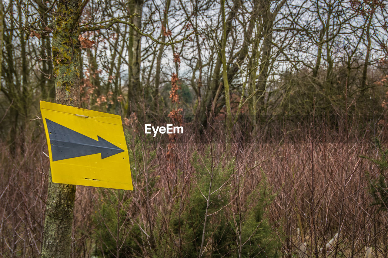 plant, sign, tree, yellow, land, communication, forest, nature, growth, tranquility, no people, day, road sign, guidance, information, outdoors, non-urban scene, arrow symbol, road, focus on foreground