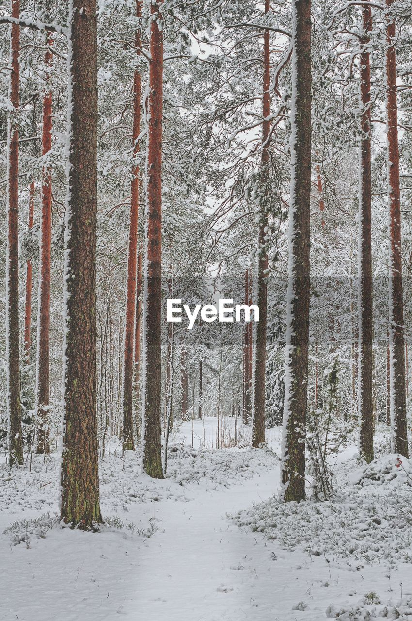 Snow covered trees in forest during winter