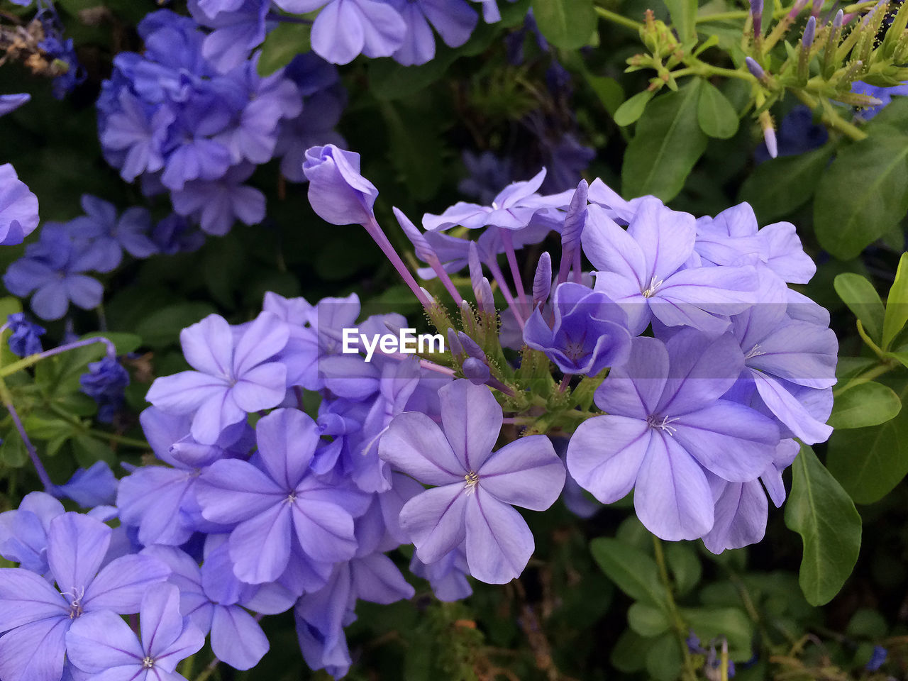 flower, beauty in nature, growth, petal, nature, fragility, plant, purple, freshness, outdoors, blooming, flower head, leaf, day, no people, close-up