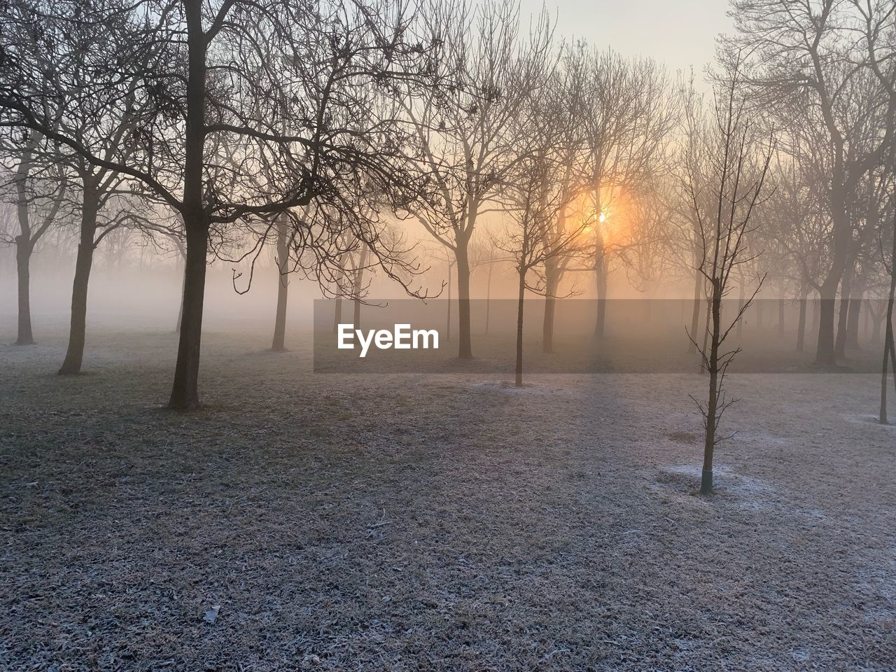 tree, fog, tranquility, plant, beauty in nature, tranquil scene, cold temperature, sky, scenics - nature, bare tree, winter, nature, landscape, sunset, no people, environment, land, non-urban scene, idyllic, sun, outdoors, hazy