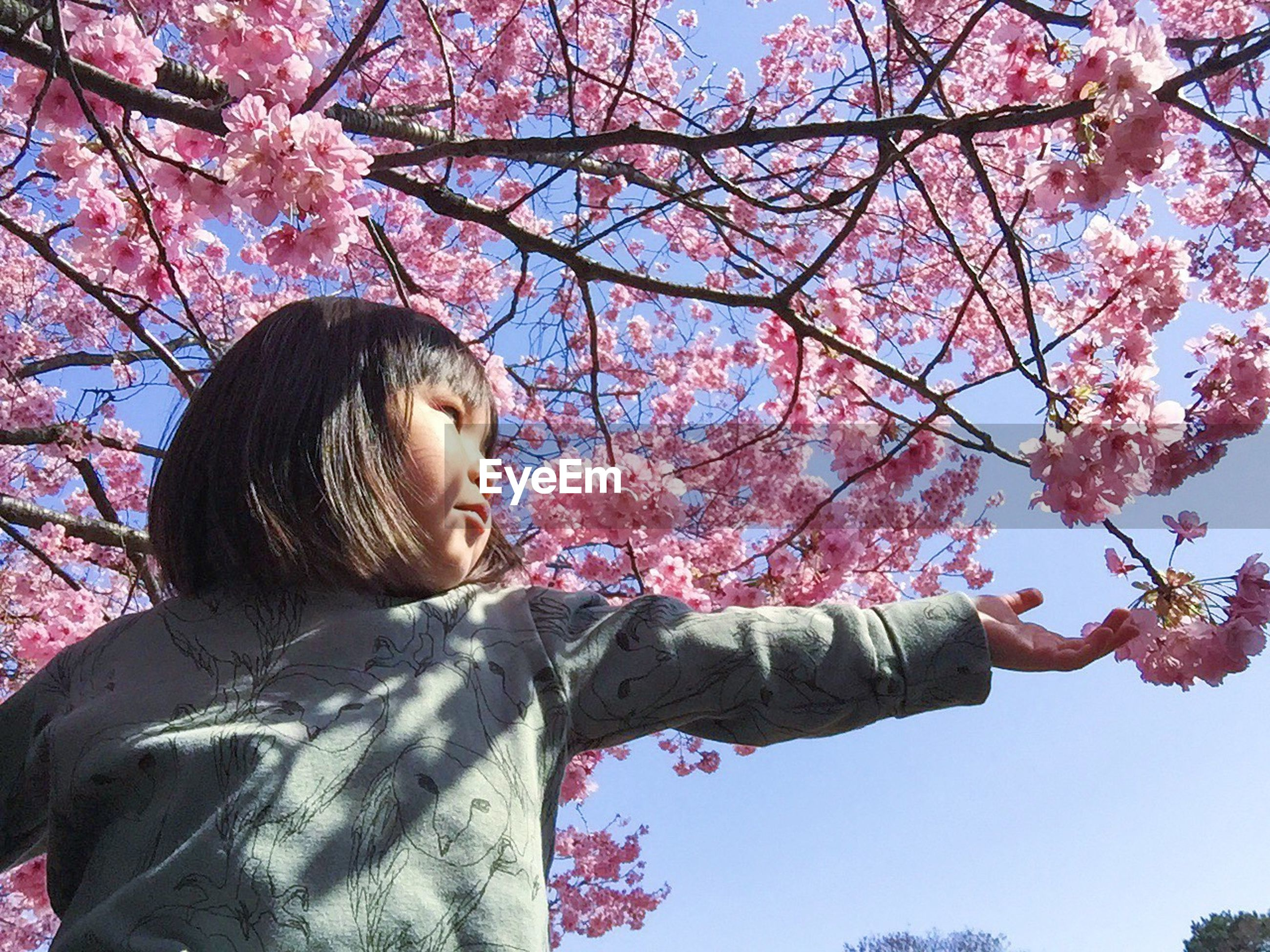 tree, flower, branch, low angle view, pink color, growth, lifestyles, leisure activity, cherry blossom, park - man made space, cherry tree, young adult, nature, person, outdoors, day, young women, sitting