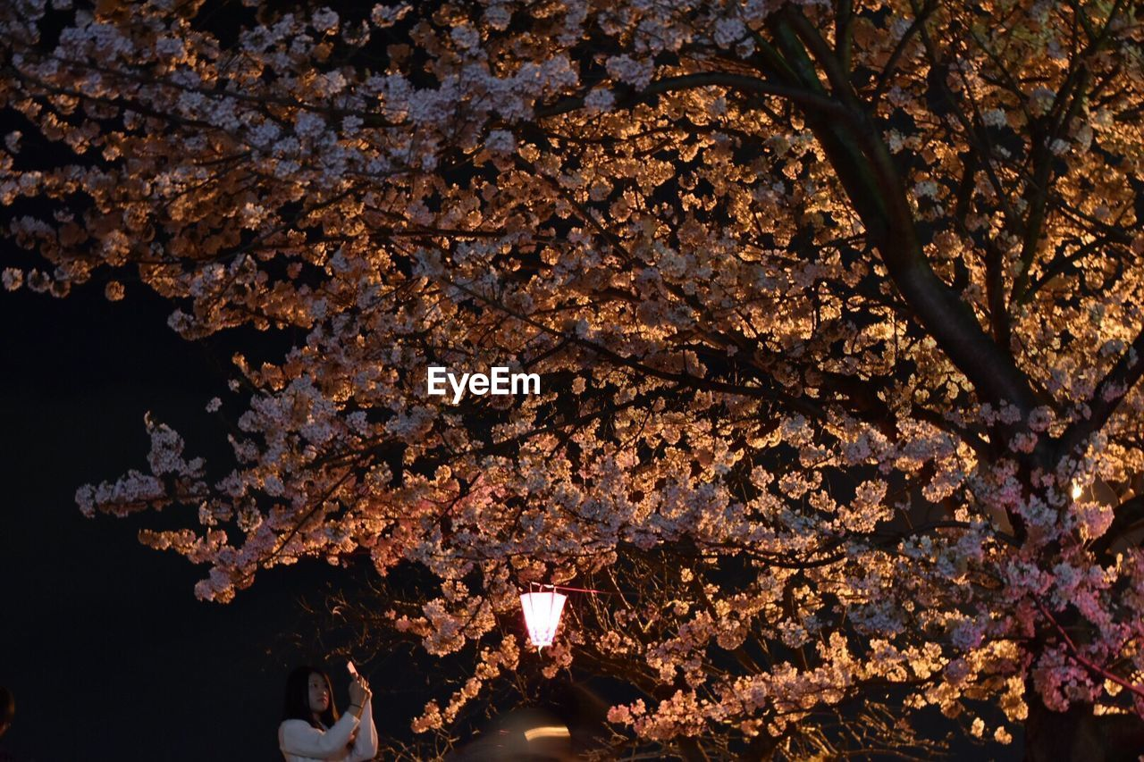 tree, branch, flower, fragility, growth, freshness, beauty in nature, no people, nature, night, outdoors, close-up, illuminated, backgrounds, leaf, flower head