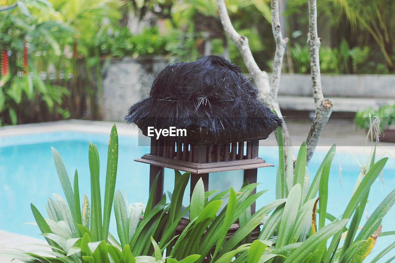 water, black color, day, one animal, plant, bird, no people, animal themes, outdoors, nature, perching