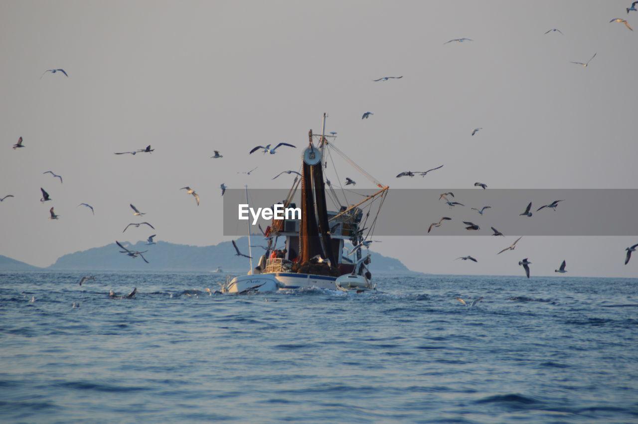 Birds flying above trawler sailing in sea