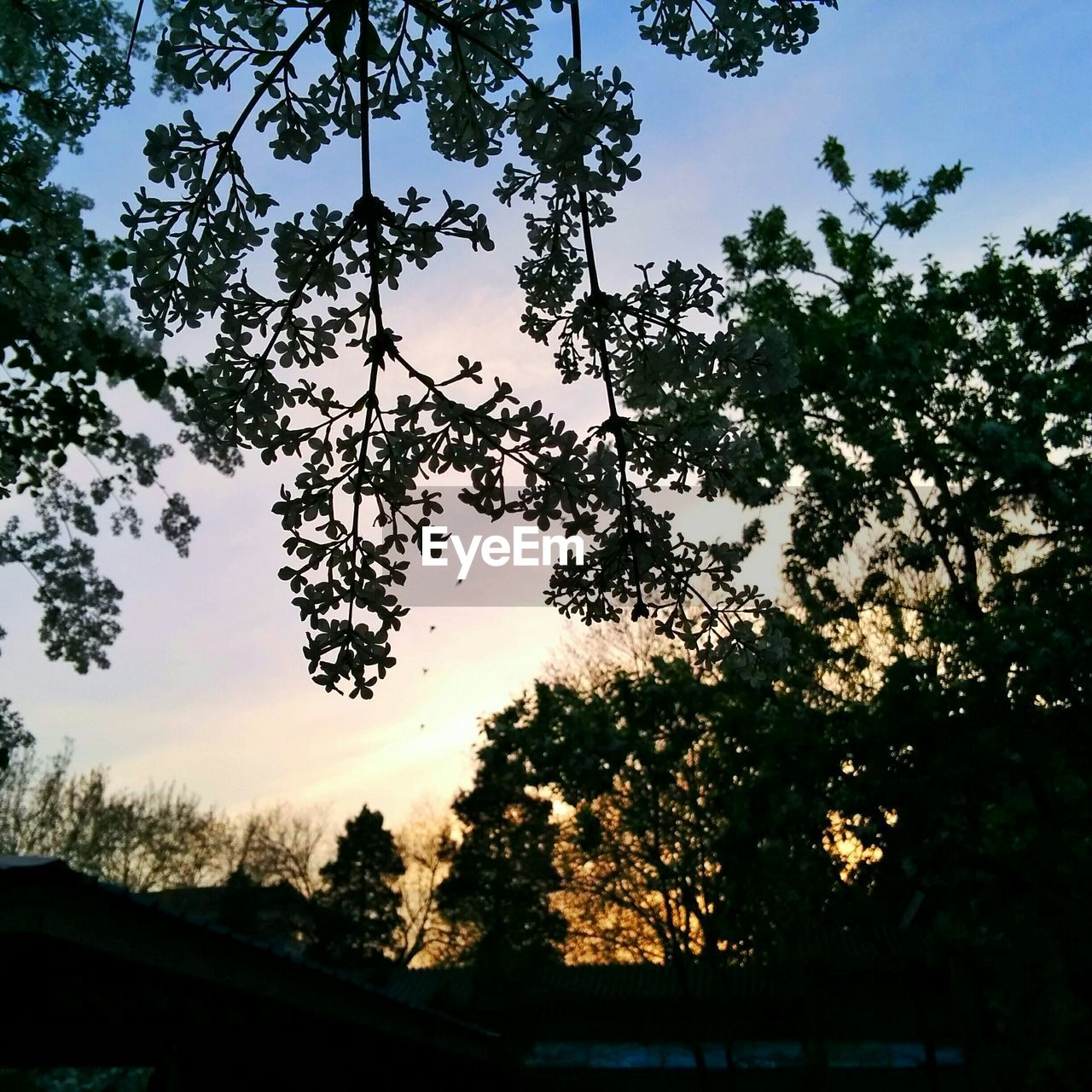 tree, low angle view, nature, sky, no people, silhouette, beauty in nature, growth, outdoors, sunset, day, branch, tranquility, scenics