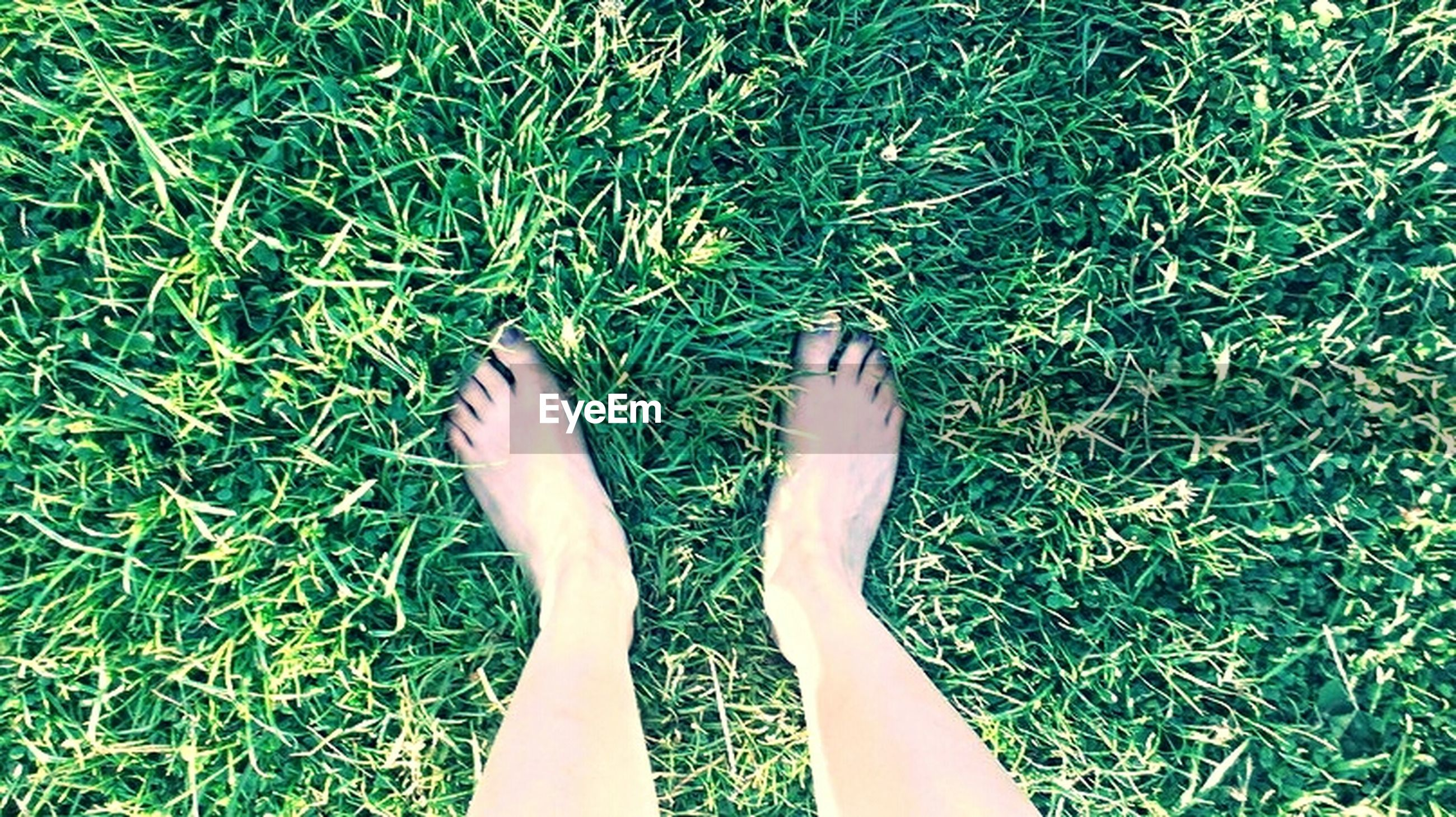 grass, low section, person, personal perspective, lifestyles, grassy, green color, leisure activity, human foot, field, high angle view, barefoot, part of, standing, shoe, relaxation