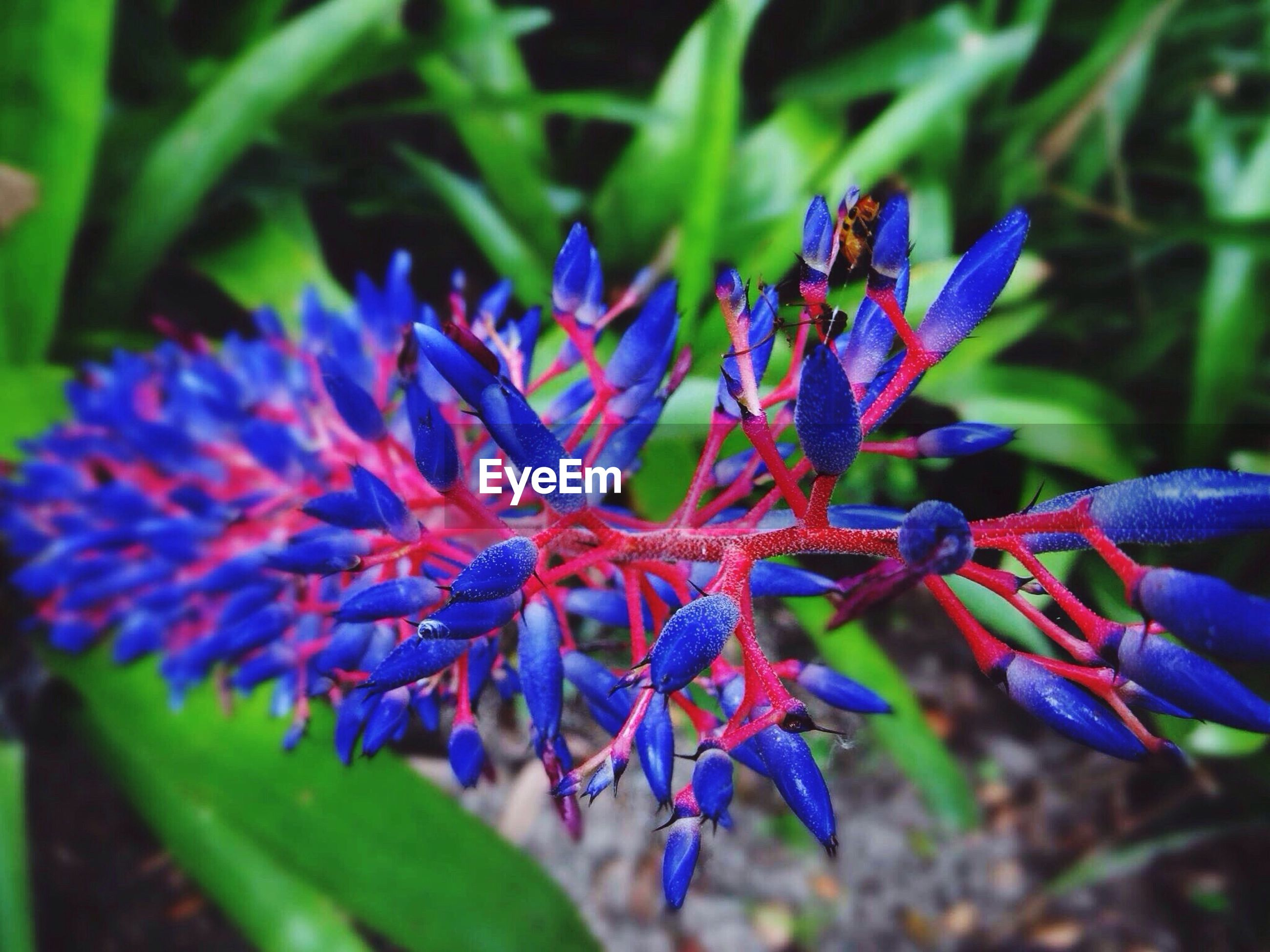 flower, purple, freshness, petal, growth, fragility, close-up, focus on foreground, beauty in nature, flower head, plant, nature, blooming, blue, leaf, selective focus, park - man made space, day, outdoors, in bloom