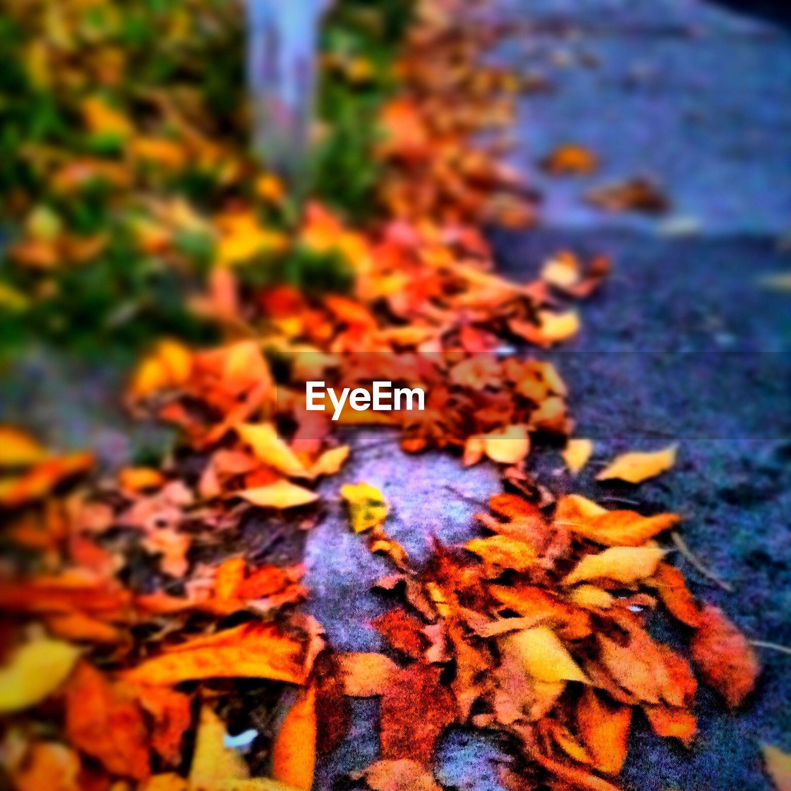 High angle view of autumn leaves on walkway