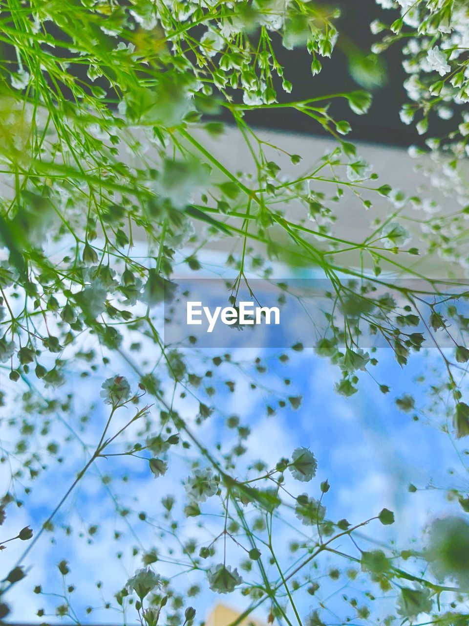 plant, growth, tree, beauty in nature, nature, no people, day, green color, low angle view, tranquility, branch, leaf, flower, plant part, freshness, selective focus, outdoors, flowering plant, close-up, sky
