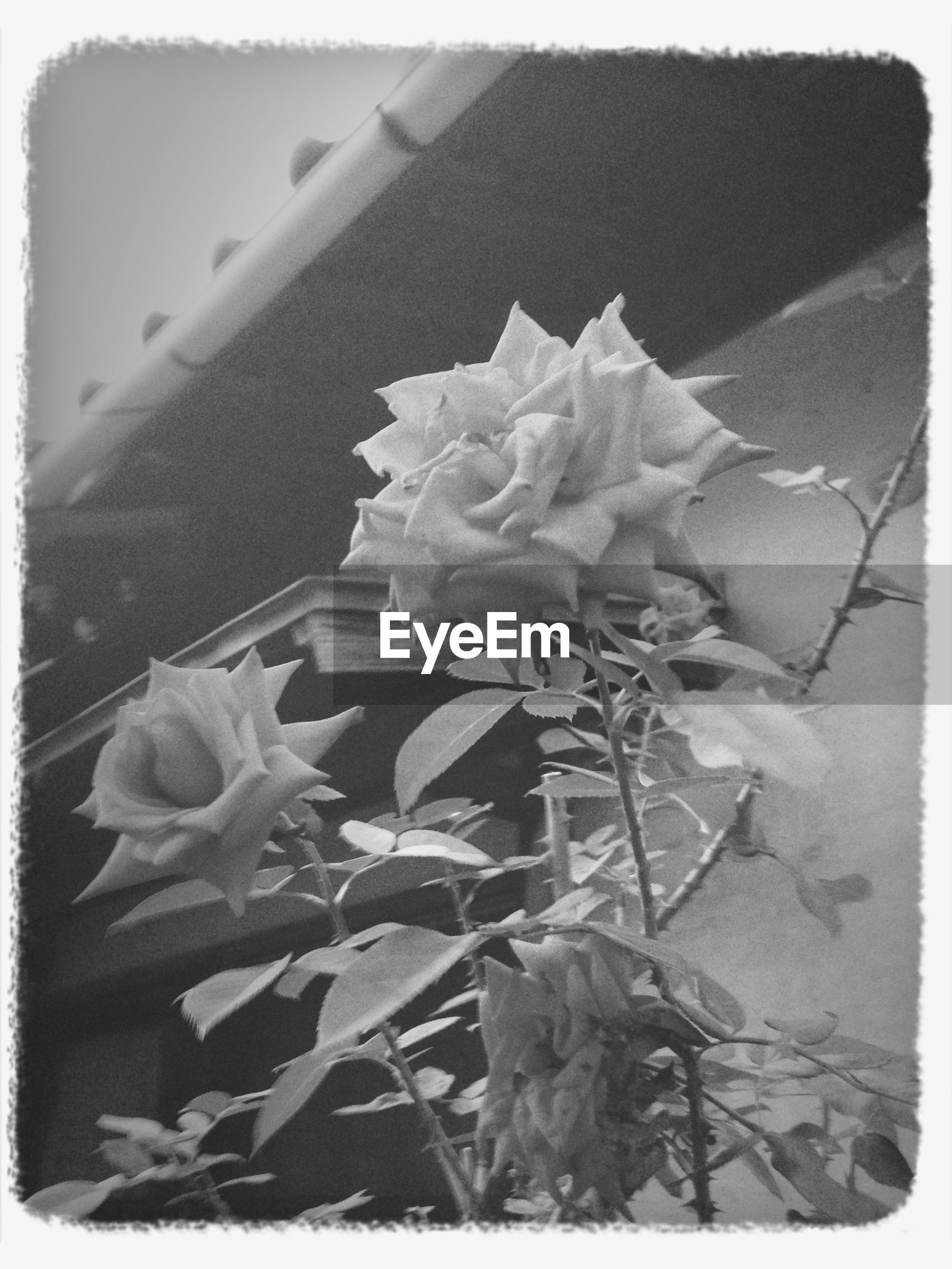 transfer print, auto post production filter, leaf, flower, fragility, plant, close-up, nature, growth, petal, freshness, outdoors, no people, day, beauty in nature, flower head, high angle view, frame, vignette, sunlight