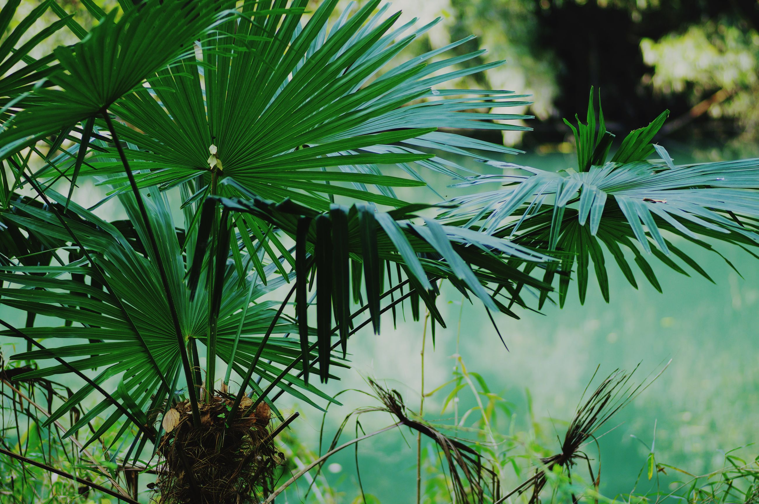 CLOSE-UP OF PLANT WITH PINE TREE