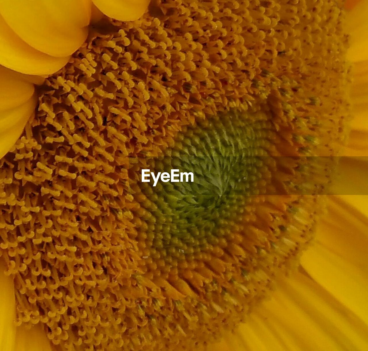 freshness, yellow, flower, fragility, close-up, beauty in nature, no people, full frame, petal, backgrounds, nature, flower head, growth, indoors, day