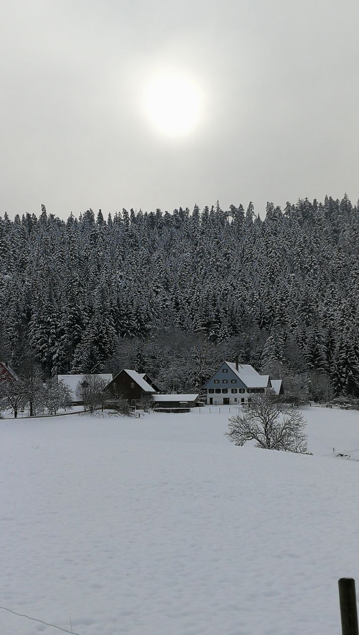 snow, winter, cold temperature, nature, tranquility, beauty in nature, sun, tree, outdoors, scenics, no people, tranquil scene, landscape, day, sky