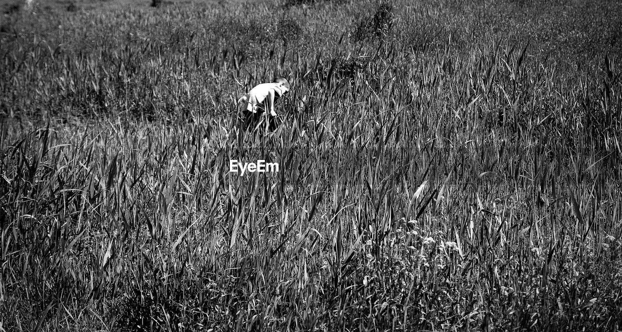 VIEW OF ANIMAL ON LAND