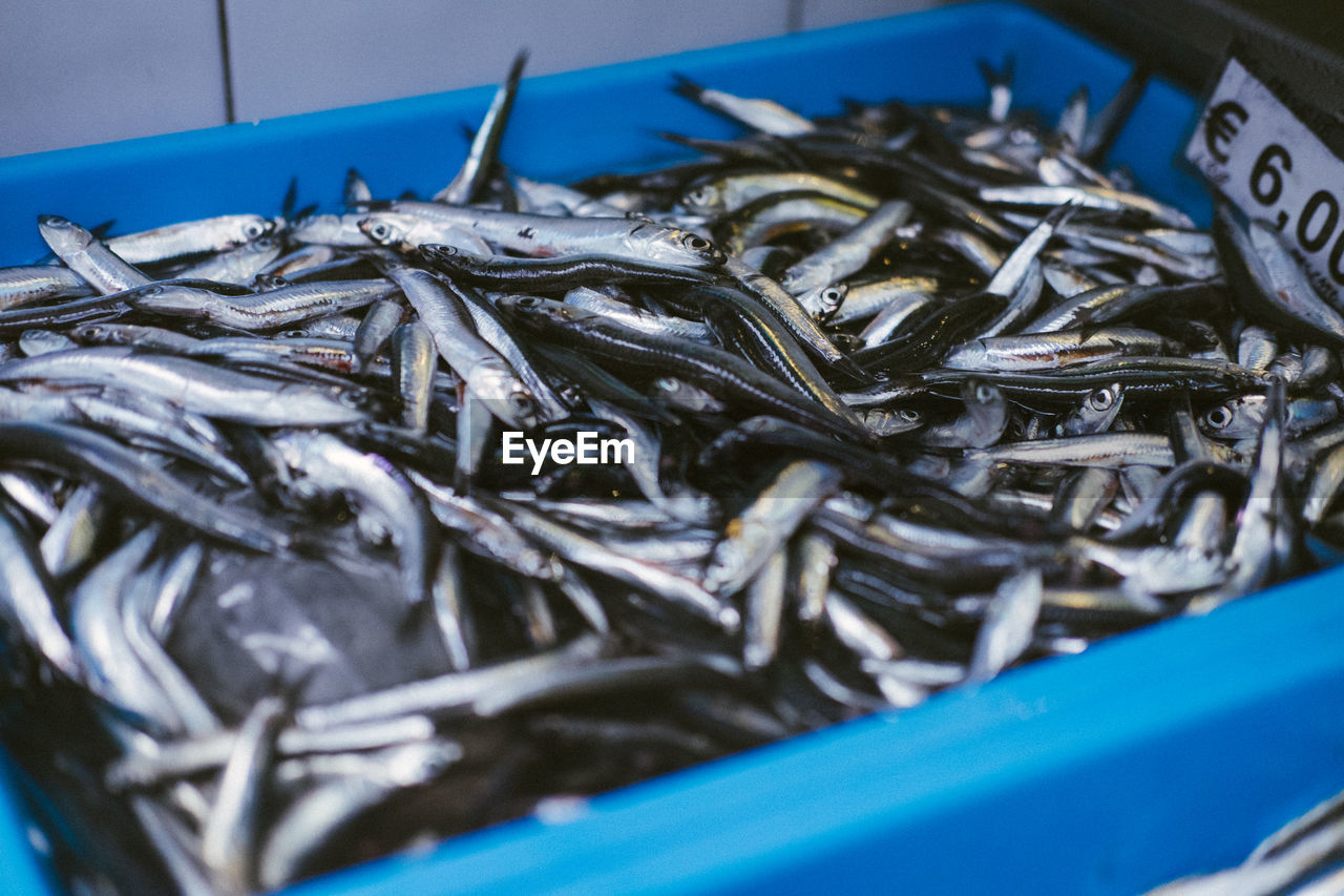 seafood, food and drink, food, fish, vertebrate, still life, animal, fishing, market, no people, wellbeing, freshness, close-up, healthy eating, raw food, selective focus, fishing industry, retail, for sale, large group of objects, fish market, tray