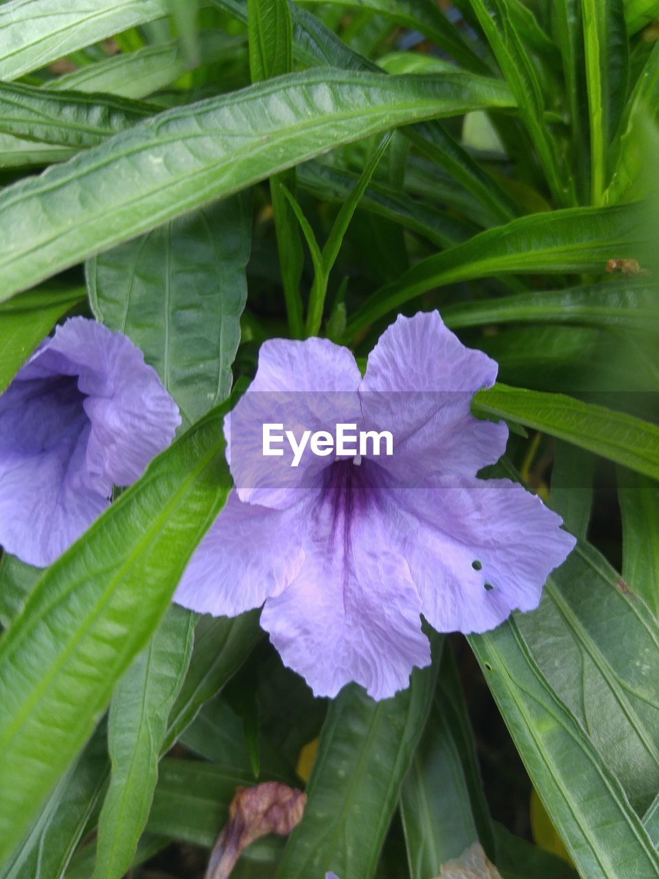 growth, leaf, plant, nature, beauty in nature, flower, fragility, purple, green color, petal, day, outdoors, freshness, no people, close-up, blooming, flower head