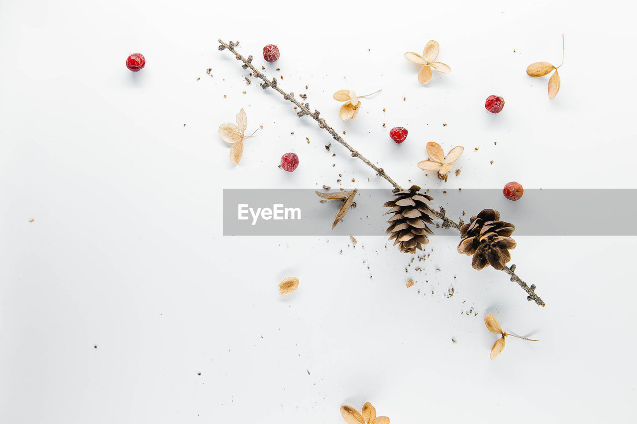 indoors, high angle view, studio shot, white background, beauty in nature, no people, flower, white color, table, still life, directly above, insect, flowering plant, nature, large group of objects, freshness, food and drink, plant, food, invertebrate