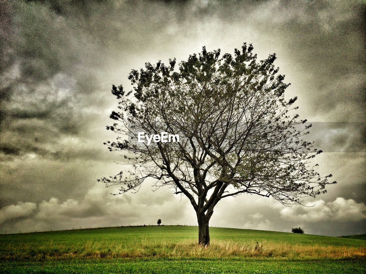 lone, tree, field, landscape, sky, isolated, solitude, beauty in nature, nature, tranquility, horizon over land, grass, branch, outdoors, scenics, bare tree, day, no people