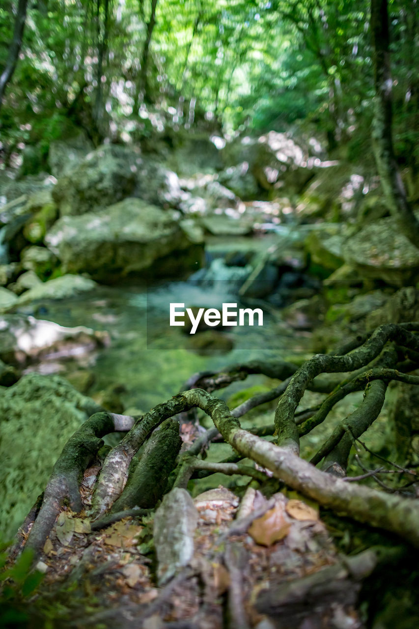 plant, green color, no people, selective focus, nature, forest, tree, day, growth, close-up, food and drink, moss, water, land, freshness, outdoors, beauty in nature, food, plant part